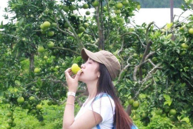 Paket Wisata Malang Batu Bromo - Petik Apel