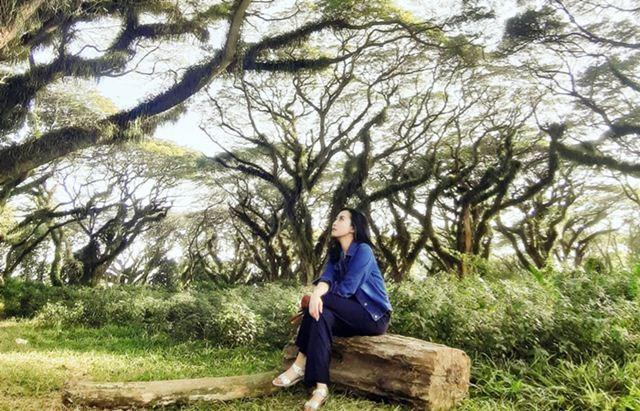 Wisata di Jawa Timur - Hutan Djawatan Benculuk